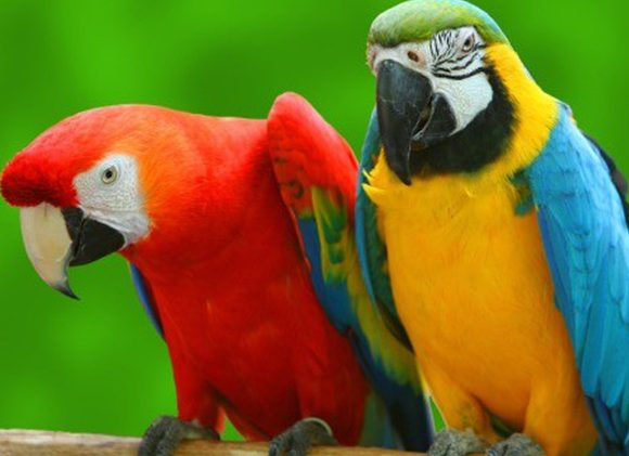 Kuala Lumpur Bird Park (KL Bird Park)